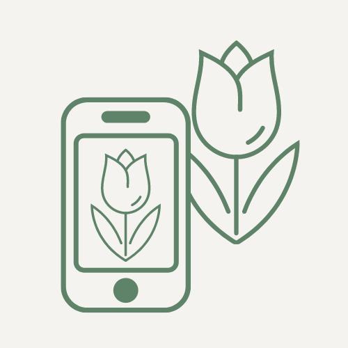 Виртуальный ботаник: отправь растения в онлайн!